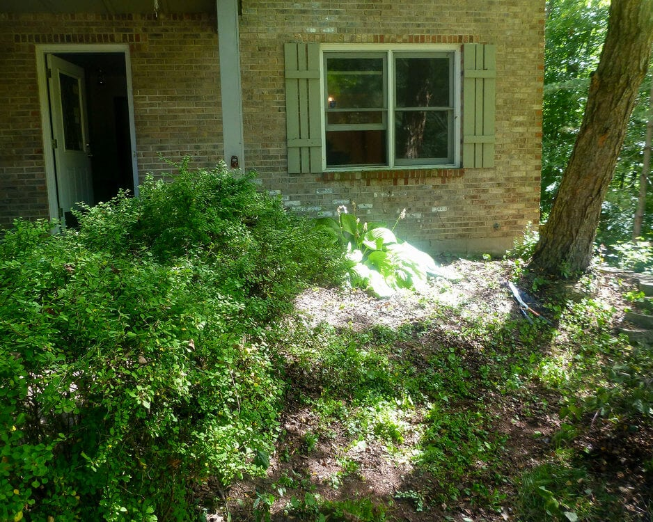 overgrown landscaping before renovating